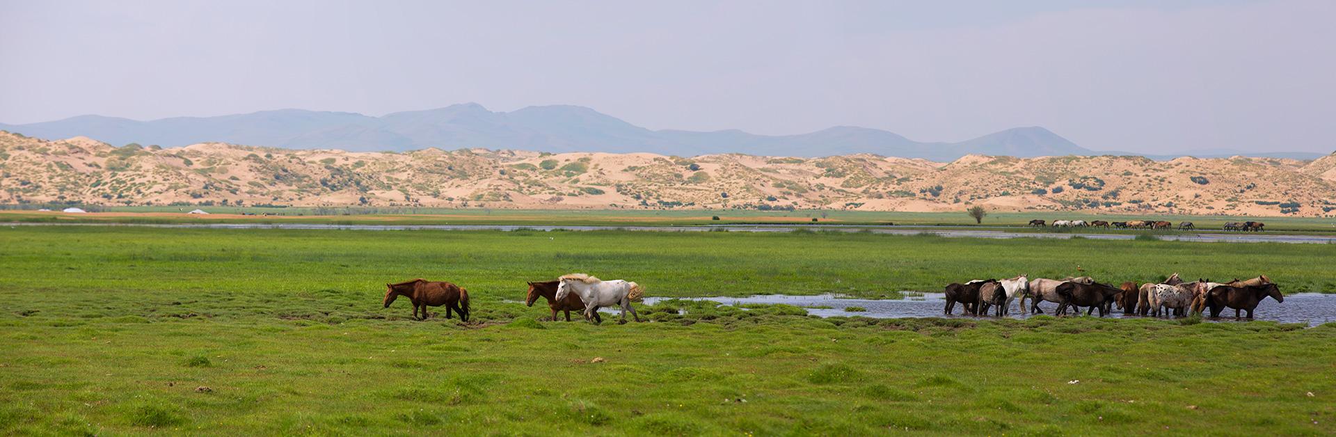 BIENVENUE EN MONGOLIE, LA DESTINATION INSPIRANTE | Ressourcez-vous avec une expérience unique